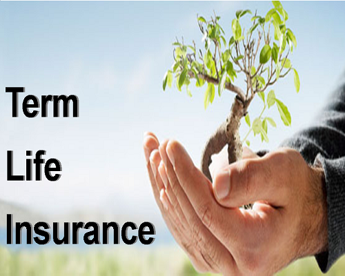 5 Term Insurance Plans With The Best Claim Settlement Ratios In India